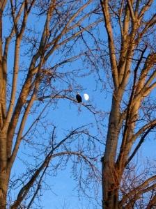 Bald eagle, Green Lake, Winter Solstice