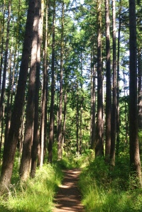 Seeing the forest for the trees.    Quimper Peninsula