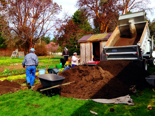 Unloading Dirt, Quimper Grange Food Bank Garden ©Julie Christine Johnson