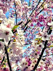 Blossoming  ©Julie Christine Johnson 2014